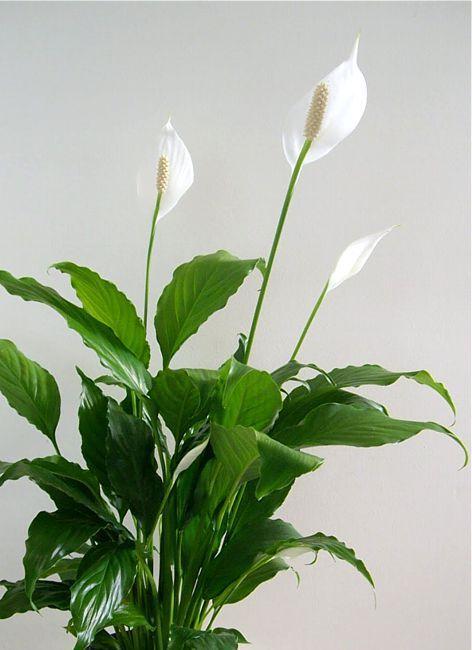 Najlepsze Kwiaty Do łazienki Perfekcyjnawdomupl